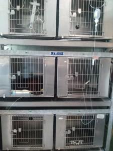 Kutyák, macskák, nyulak kórházi elhelyezése a Budafoki Állatgyógyászati Központban